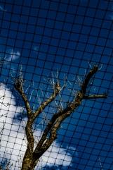 jUSTIN NG tree