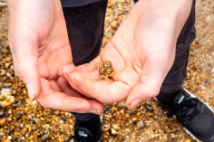 Whitstable_8218